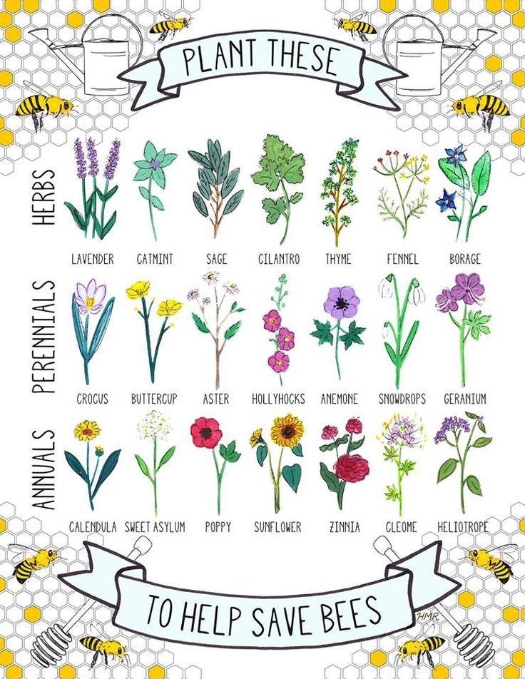 Plant These To Help Save Bees - lovely illustration of plants that bees are attracted to :)