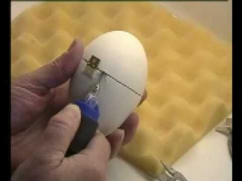 Egg Art - cutting an egg to add a hinge and make a trinket box