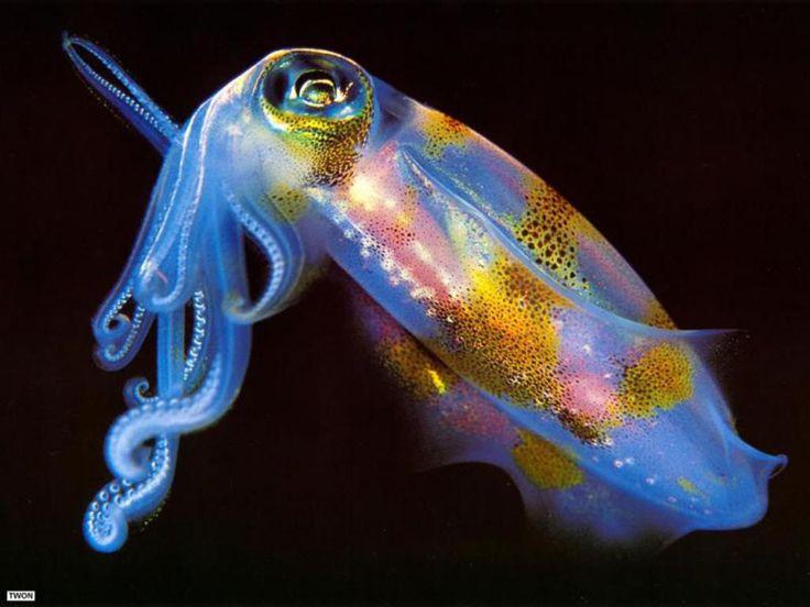 Peces raros del fondo del mar 3