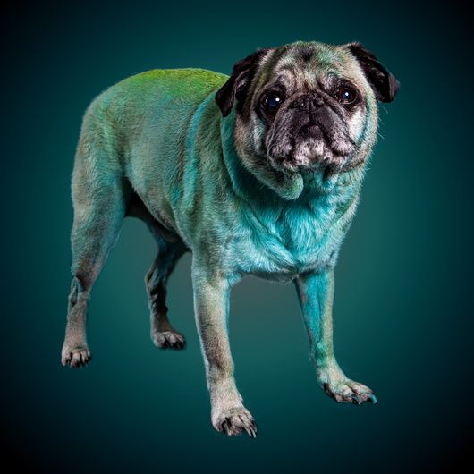 Simple Tips For Effectively Photographing Dogs In Studio Dogs