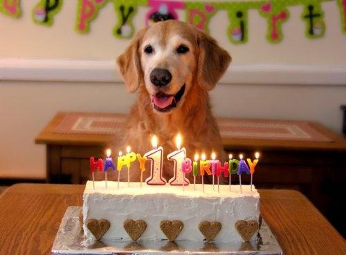 Birthday Cakes For Dogs In Massachusetts ~ 23 best funny easter photos images on pinterest funny pics ha ha