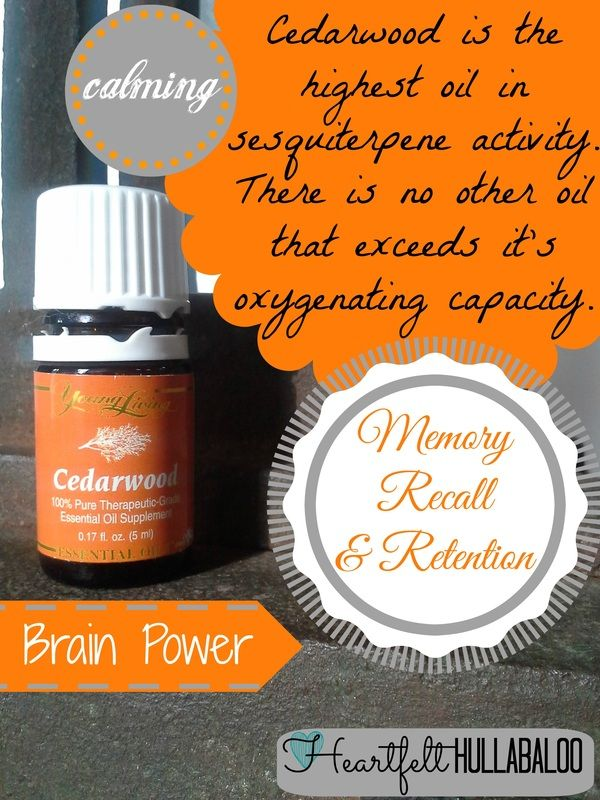 Cedarwood is the highest oil in sesquiterpene activity.  There is no other oil that exceeds it's oxygenating capacity.  Calming.  Increases brain power, memory recall, and memory retention. Heartfelt Hullabaloo.  Young Living Essential Oils.