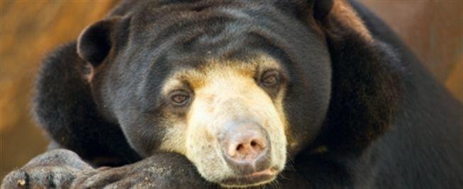 Volunteer Cambodia Bear Sanctuary | UK Charity | Globalteer