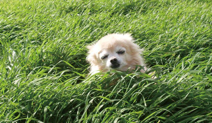 犬のことわざ故事成語人生で大切なことはみんなイヌコトバが教えてくれた