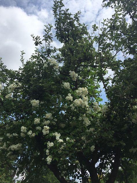 Sichtschutz Im Garten Mit Schnell Wachsenden Pflanzen Garten