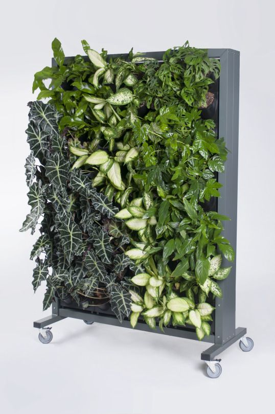 Vertical Garden, Green Wall, Plants indoors, Design