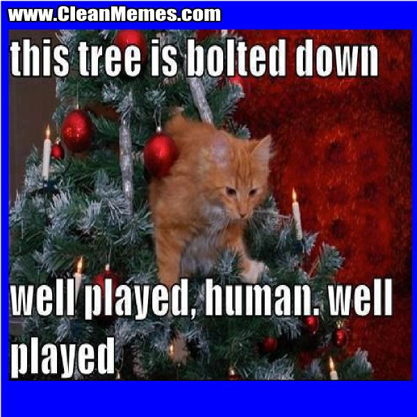 Funny Christmas Cat Meme : Best images about christmas memes on pinterest