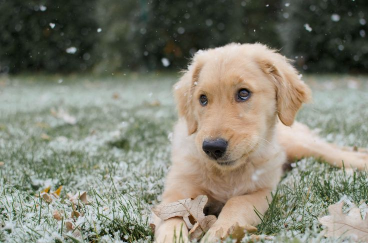 Those puppy eyes... her first snowfall! - Imgur