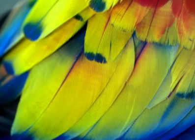 #colourful #feathers