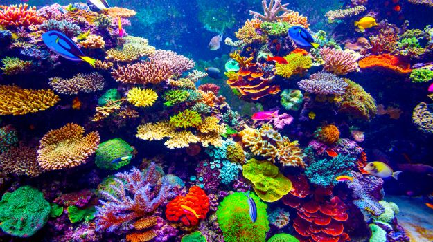 Amazing wealth of under water from Andaman Nicobar island ... 10 Most Beautiful Coral Reefs World
