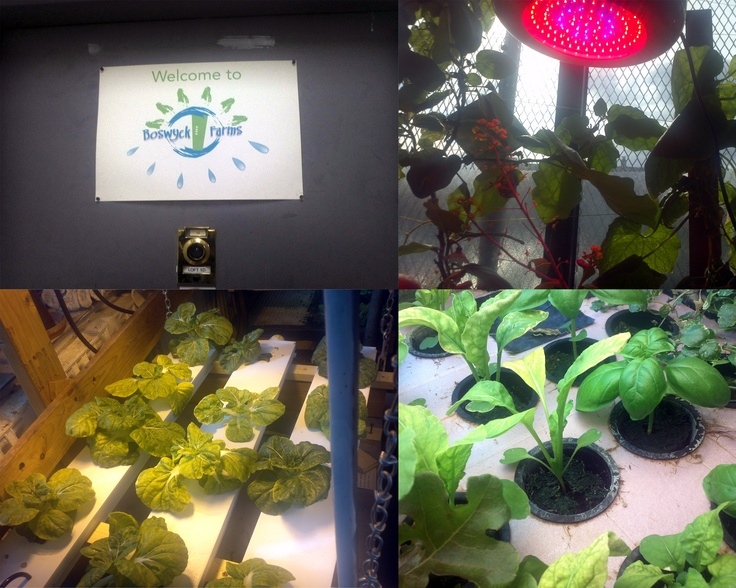 """Thanks for the pin, Advanced Nutrients! """"Boswyck Farms in #Brooklyn -- a hydroponics learning experience!"""""""