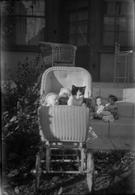 Cat and Dolls in a Pram by ChrisWarren1956, via Flickr