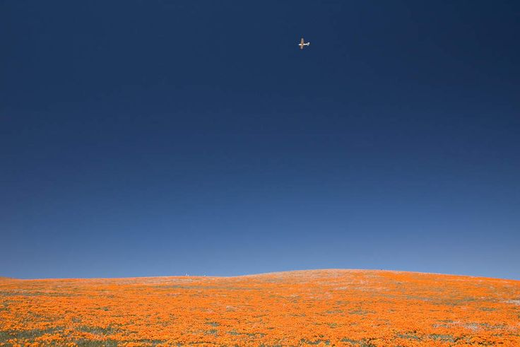 The 15 Most Beautiful Places in California You Didn't Know Existed  Poppy Reserve Antelope Valley Fields of the California state flower, literally for as far as you can see. It's one of those things that makes you feel incredibly small in the grand scheme of things.