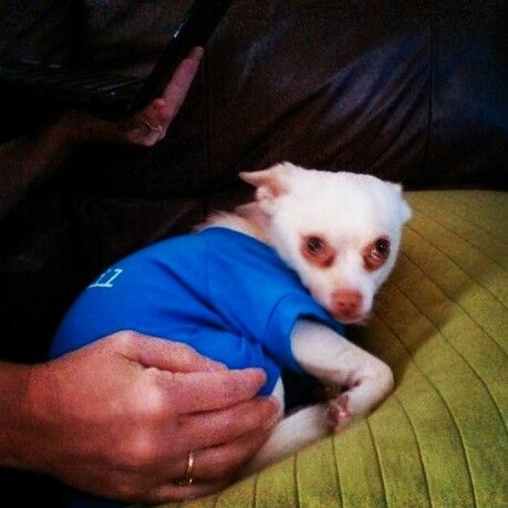 150 best dog grooming images on pinterest dog grooming dog my baby solutioingenieria Choice Image