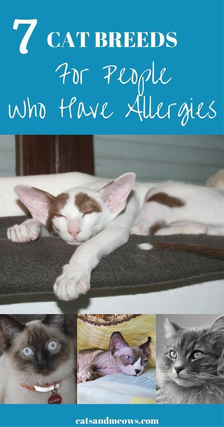 Howtodrawcats Catsuit Cat Allergies Cat Breeds Best Cat Breeds