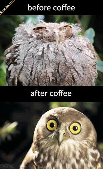 Before Coffee Vs After Coffee   Click the link to view full image and description : )