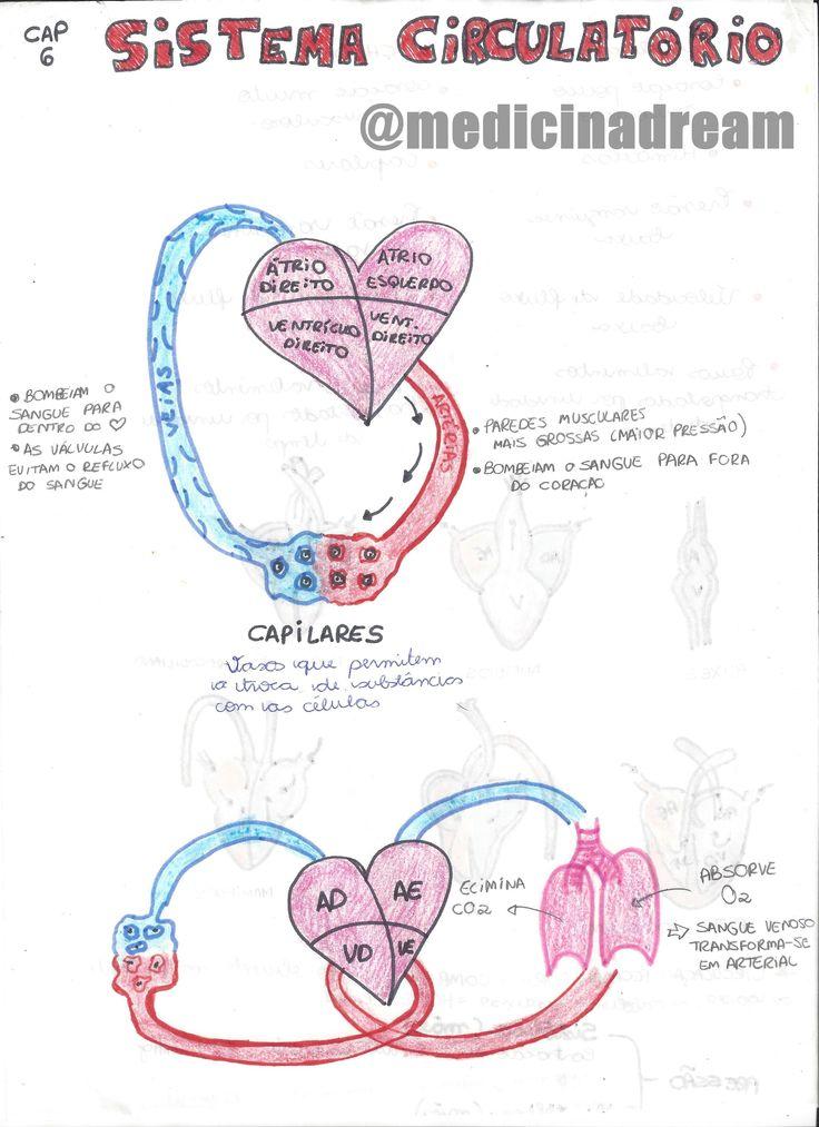 // ♦ CORREÇÃO: No resumo de Eritroblastose fetal, o título está incorreto. Com um S a mais:/