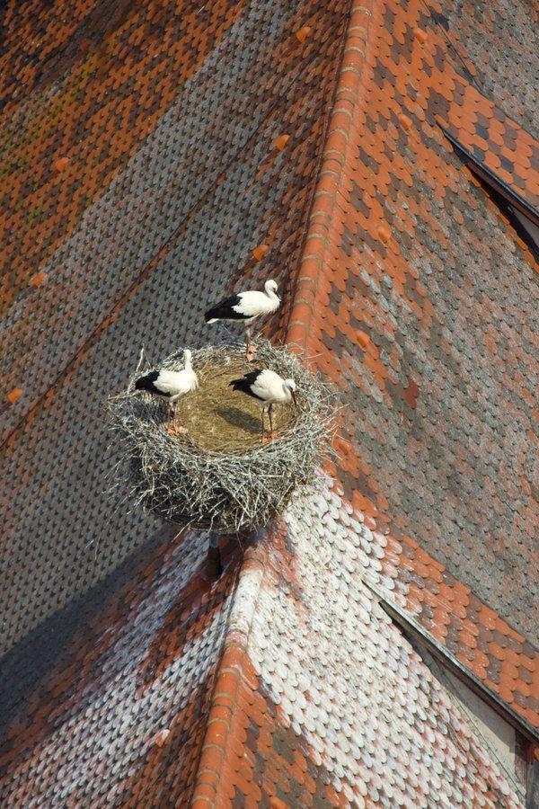 """recherchestetique: """" darkerangels: """" From Up Above by DeviantTeddine """" nest """""""