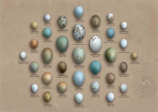Bird S Eggs Bird Eggs Pinterest Eggs And Birds