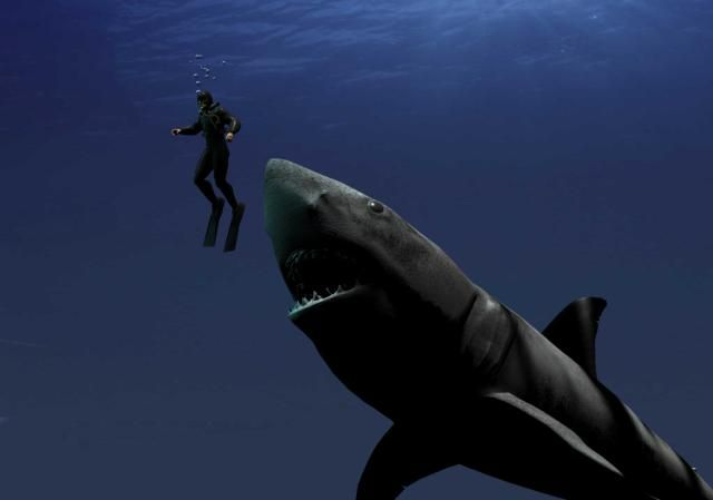 Pictures of the Megalodon, the Giant Prehistoric Shark ...