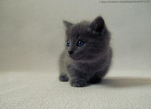 cute cats and kittens | black cat, cute, ella, kitten, little, puppy - inspiring picture on ...