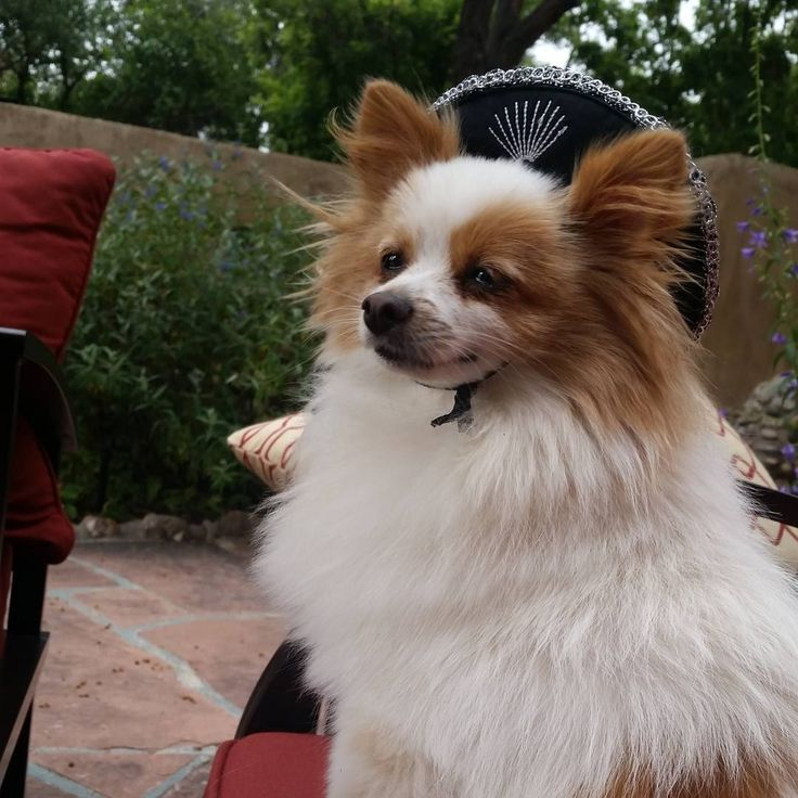 Best 25 Dog Friendly Hotels Ideas On Pinterest Pet That Take Dogs And Allow