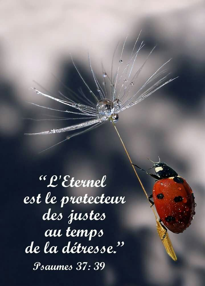 Psaumes 37 : 39