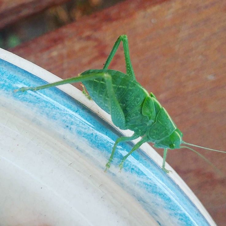 What is this?  #bug #greenbug #nm #nature #ABQ
