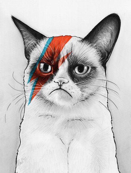 Grumpy Cat as Grumpy Bowie, David NOie by Olechka
