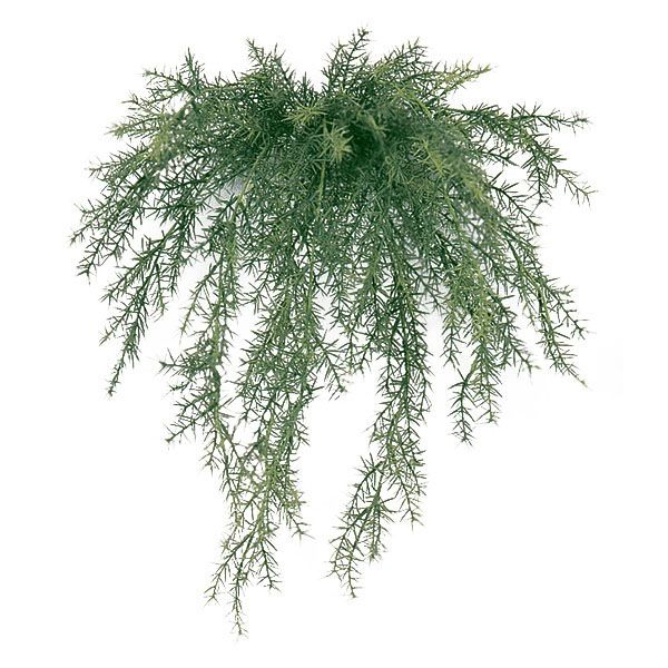 Shop for 20 inch Outdoor Sprengerii Bush: Unpotted at Artificial Plants and Trees