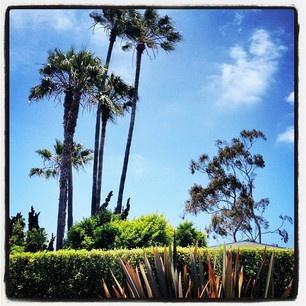 June in Laguna Beach 92651