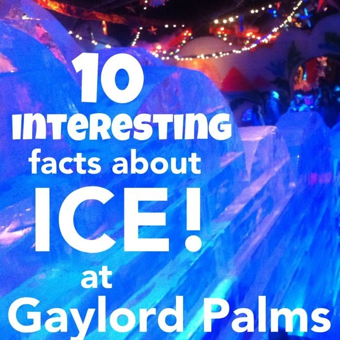 Ice coupons gaylord palms