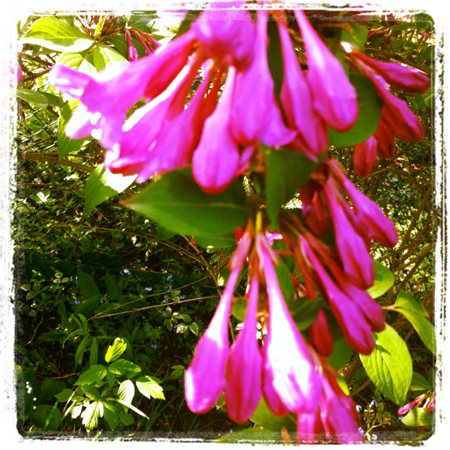 May Garden -- Day 16