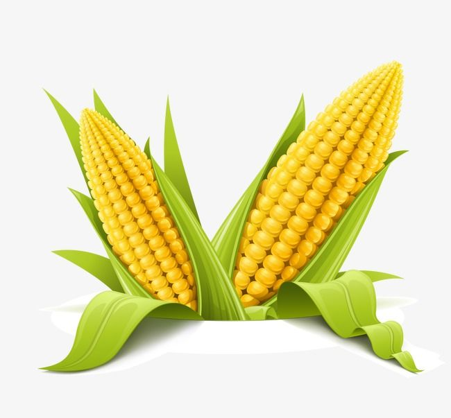 Hd Farm Simulation Vegetables Vector Material Corn Hd Agricultural Products Simulation Of Vegetables Corn Png Transparent Clipart Image And Psd File For Fr Corn Clip Art Different Vegetables