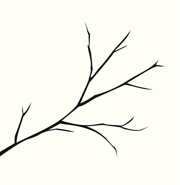 картинка веточка дерева без листьев конгрессе обсуждались вопросы