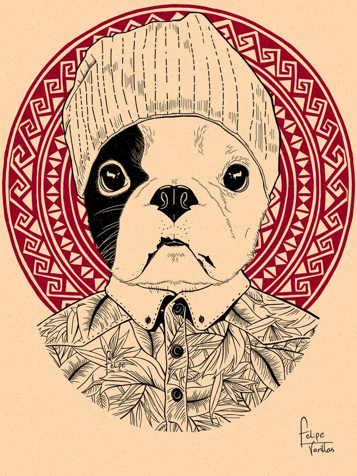 Fuck you! perro hipster!