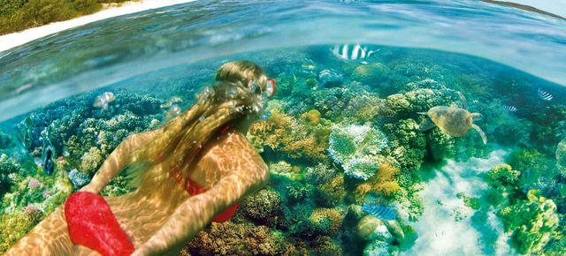 Catseye guided snorkel. $15