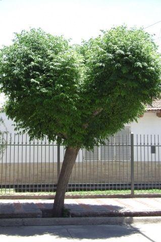 New Love Grows On Trees Lyrics