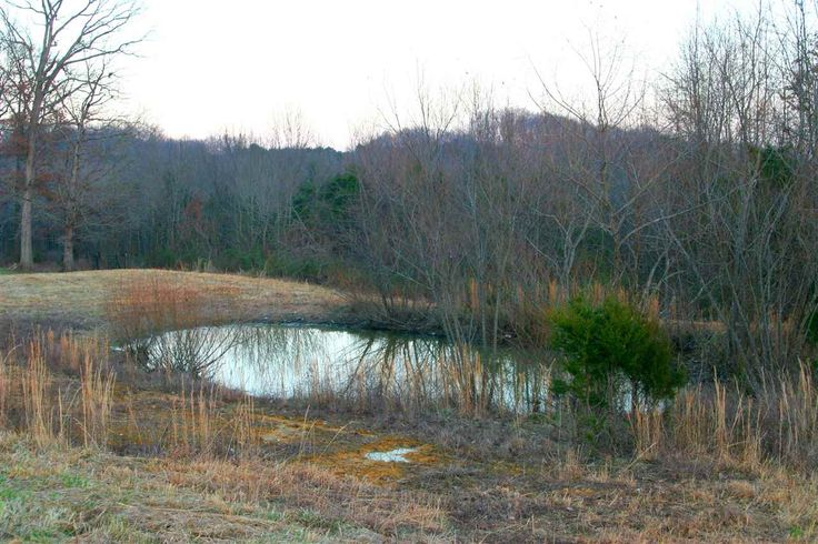 5.5 Acres for Sale $60,000 in Glasgow, Kentucky