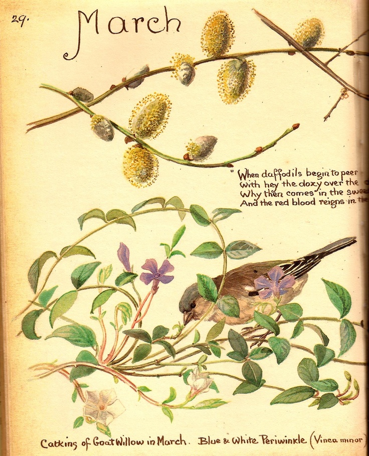 March, from Country Diary of an Edwardian Lady by Edith Holden