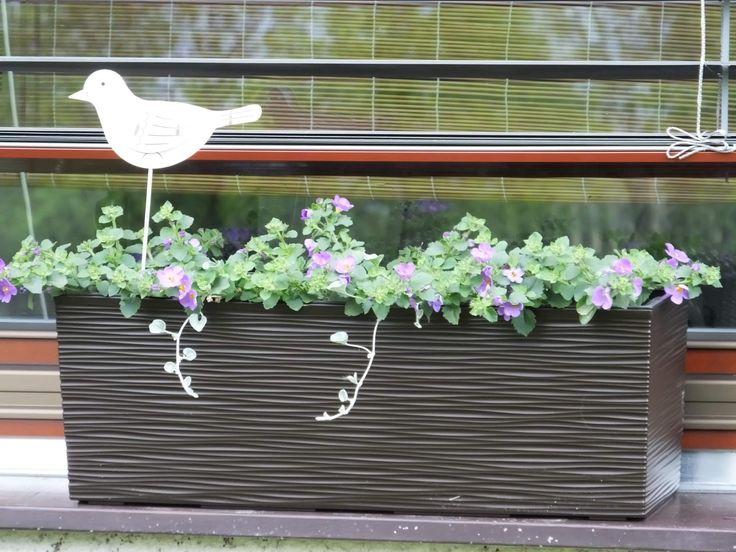 Truhlíky se nebojte umístit na okenní parapet. Vaše okna budou nádherné kvést.  Ještě nemáte truhlíky - šup sem pro ně: http://www.harasim.info/1893/plastove--samozavlazovaci-truhliky/ Truhlíky můžete navíc ozdobit stylovými zápichy: http://www.harasim.info/1847/zapichy/