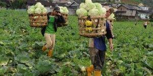 Agroteknologi..web.id Sumber Informasi Pertanian Indonesia
