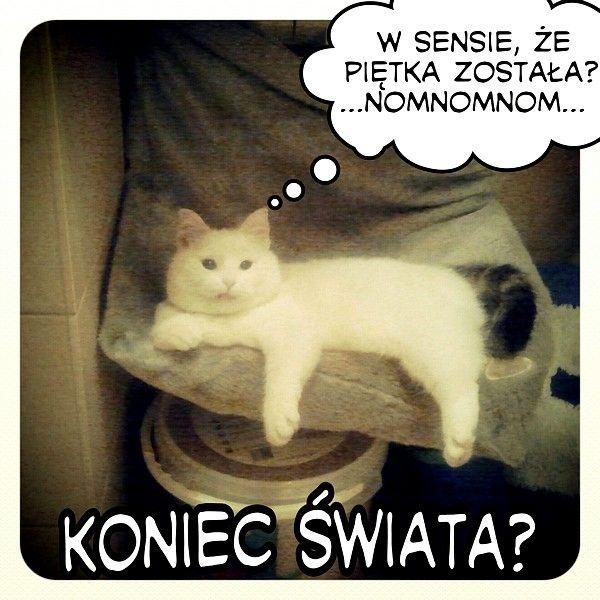W temacie Końca Świata wypowie się Kazik  http://teracotta.pl/blog/