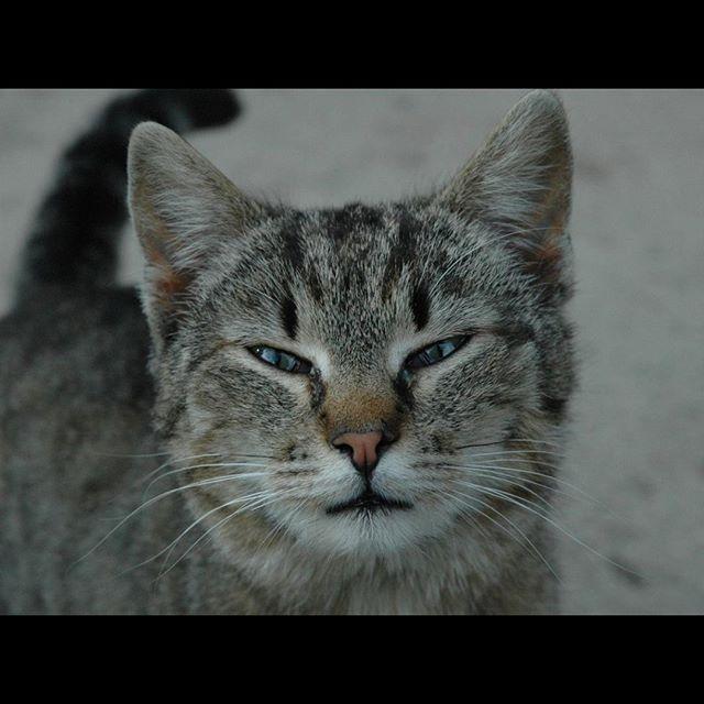 Monchatdore Chat Cat Instacat