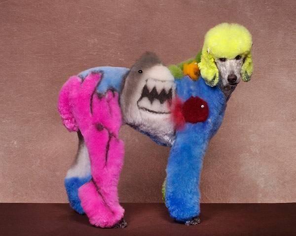78 best Creative Groomings images on Pinterest   Creative grooming ...
