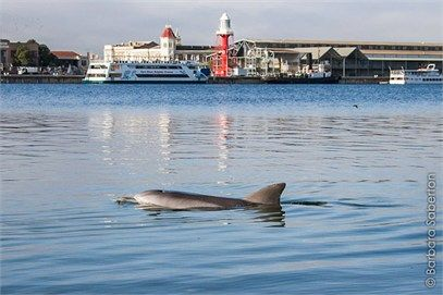 The Adelaide Dolphin Sanctuary-Department of Environment, Water and Natural Resources (DEWNR)
