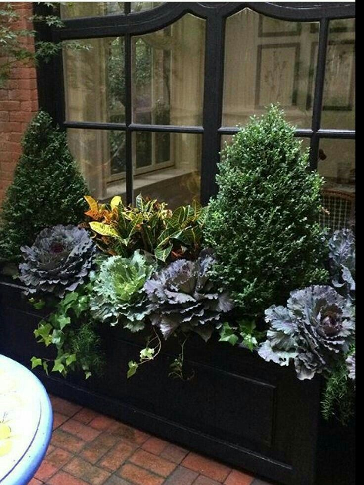 For the private garden #fallplanters #fallwindowboxes