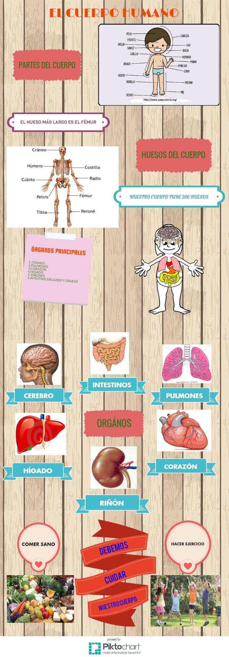 infografia el cuerpo humano | Piktochart Infographic Editor