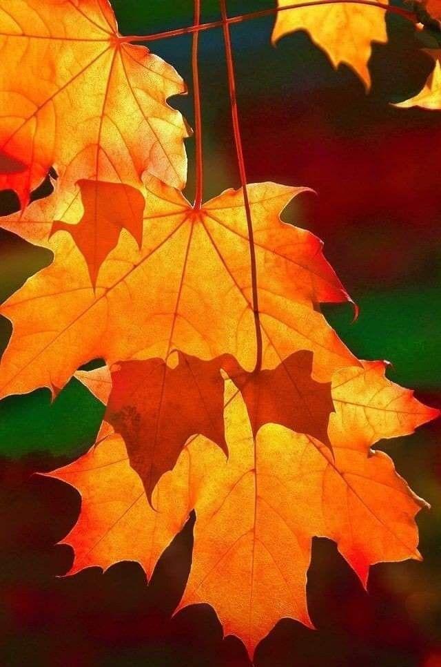 Pin By Ahmedahmed On Miscellaneous Pinterest Likes Autumn Scenery Autumn Photography Autumn Aesthetic