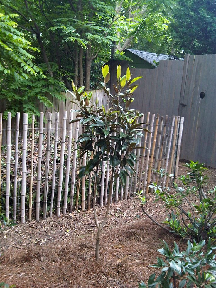 Simple Inexpensive Wire Fence With Bamboo Poles Simply